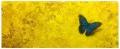 Yellow Expanse